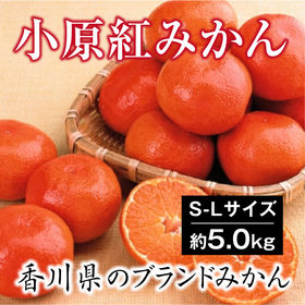 【予約】12/6~順次出荷【約5.0kg(S-L)】香川県産...