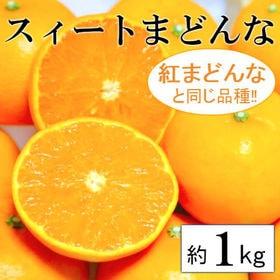 【予約受付】11/30~順次出荷【約1kg】愛媛県産 スイー...
