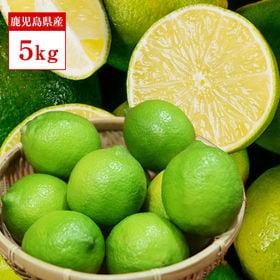 【5kg】優美農園のグリーンレモン