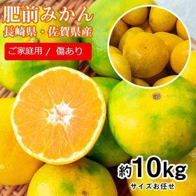 【予約受付】11/1~順次出荷【約10kg(サイズおまかせ)...
