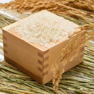 【10kg】平成29年度産 新潟県産こしひかり 5kg×2袋