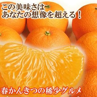 八朔(はっさく) 3kg(L-3L)