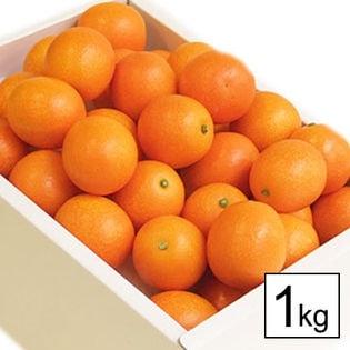 【予約受付】[1kg]宮崎県産 完熟金柑 たまたま(玉数おまかせ)