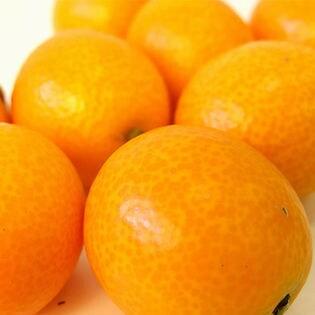 宮崎県産 完熟金柑 たまたま 1kg(玉数おまかせ)