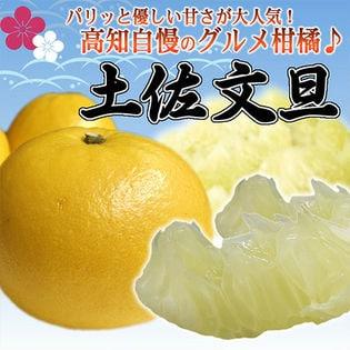 【予約受付】高知県産 土佐文旦 秀品 5kg(6-14玉)