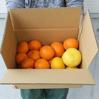 愛媛県産柑橘ファミリーセット(詰め合わせ) 5kg 家庭用(若干の葉傷・コク点あり)