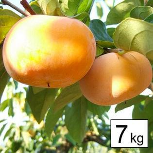 【予約受付】平井さんの種無し柿 7kg (奈良)