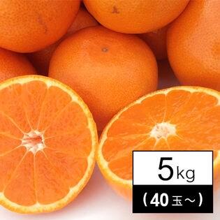 果物屋さんが選んだ九州産みかん 5kg(40玉~)