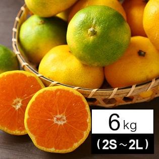 吉田みかん 6kg(家庭用・2S~2Lサイズ込み)