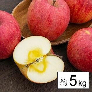 [約5kg]【糖度14度以上】山形県産りんご王将ふじ約5kg(玉数おまかせ) ※傷シミあり