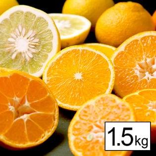 【予約受付】愛媛県産柑橘お味見セット(詰め合わせ) 1.5kg