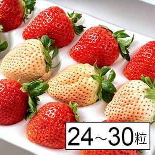 福岡産紅白いちご あまおう&淡雪 ギフト箱(24~30粒)