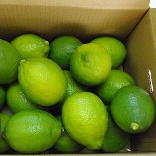 宇和島市産 レモン Mサイズ 2kg