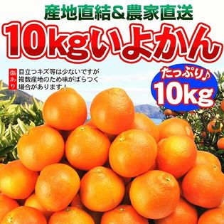 【10kg】愛媛県産 伊予柑