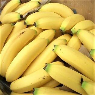 フルーツ屋さんが選んだバナナ 箱入り【13キロ】