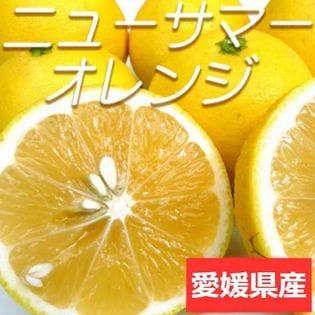 【5kg】愛媛県産 ニューサマーオレンジ 初夏の柑橘(ご自宅用・傷あり)