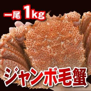 ジャンボ毛蟹 一尾 1kg