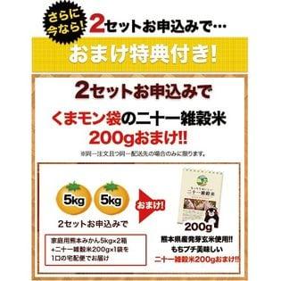 【5kg】熊本みかん※家庭用(傷あり サイズ不選別)