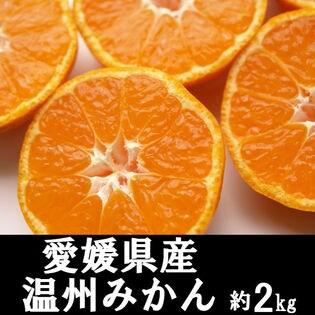 【約2kg】愛媛県産 温州みかん(ご自宅用・傷あり)