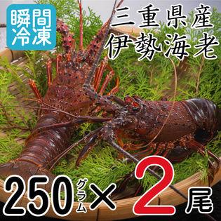 【250g×2尾】冷凍伊勢海老 刺身用瞬間冷凍