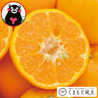 【1セット1.5kg】甘熟ポンカン※ご家庭用(傷あり サイズ不選別)