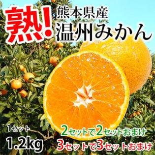 【1.2kg(2S~3L)】熊本県産 温州みかん(傷あり、不揃い、ご自宅用)