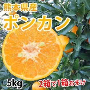【約5kg】熊本県産 ポンカン(傷あり、不揃い、ご自宅用)