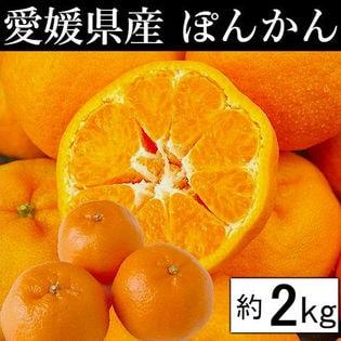 【約2kg】愛媛県産 ぽんかん(ご家庭用・傷あり)