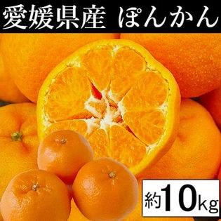 【約10kg】愛媛県産 ぽんかん(ご家庭用・傷あり)