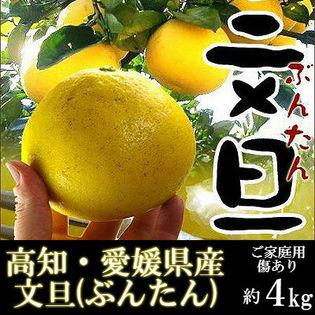 【約4kg】高知・愛媛県産 文旦(ぶんたん)(ご家庭用・傷あり)