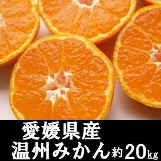 【約20kg】愛媛県産 温州みかん(ご家庭用・傷あり)