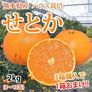 【予約受付】2/15~順次配送【約2kg】熊本県産 せとか(傷あり、不揃い、ご自宅用)