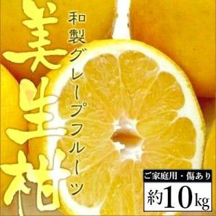 【約10kg】愛媛県産 美生柑(みしょうかん)(ご家庭用・傷あり)