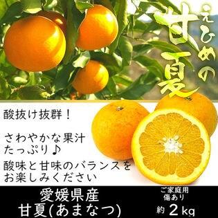 【約2kg】愛媛県産 甘夏(あまなつ)(ご家庭用・傷あり)