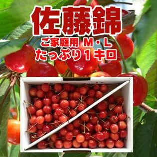【予約受付】<平日着> 山形県産 さくらんぼ 佐藤錦 M、Lサイズ ご家庭用 1kg