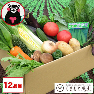 【1セット12品入】安心・安全 ご家庭用 野菜セット 旬の野菜12品