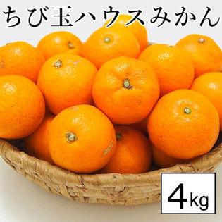 【約4kg】愛媛県産 ちび玉ハウスみかん(ご家庭用・傷あり)