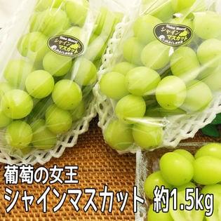 【約1.5kg (3?6房)】シャインマスカット (傷あり・ご家庭用)