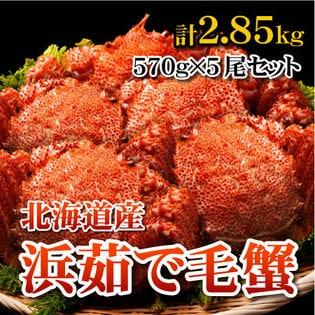 【計2.85kg】北海道産 浜茹で毛蟹 大570g×5尾セット
