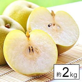 【約2kg】愛媛・徳島県産 梨(なし)品種おまかせ(ご家庭用・傷あり)