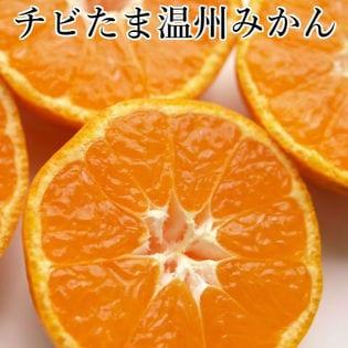 【約10kg】愛媛県産 チビたま温州みかん(ご家庭用・傷あり)