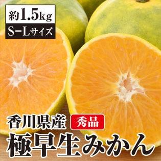 【予約受付】10/18~順次配送【約1.5kg(S-L)】香川県産 秀品 極早生みかん