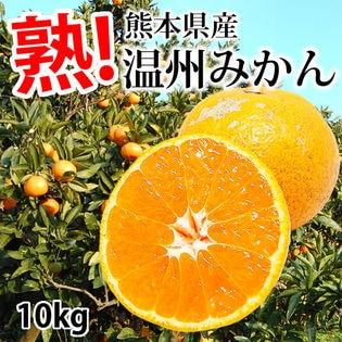 【約10kg】温州みかん 熊本県産 (ご家庭用・傷あり)