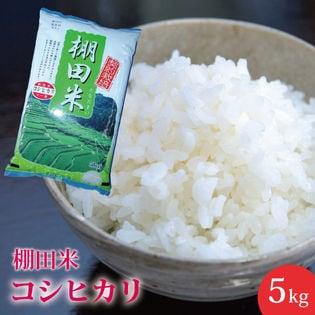 【5kg】新潟県産 棚田米 コシヒカリ ≪令和二年産≫