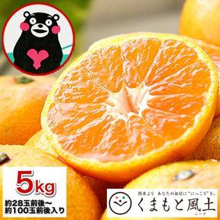 【1セット5kg】熊本みかん※家庭用(傷あり サイズ不選別)
