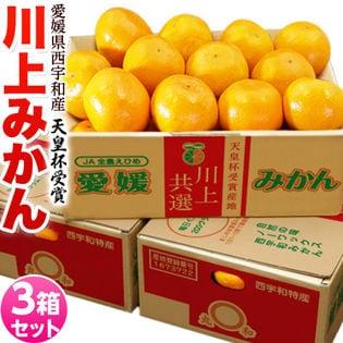 【計9kg(約3kg×3箱/2Lサイズ)】愛媛県産 川上みかん