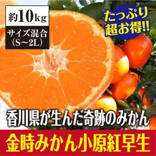 【約10kg】たっぷりお得 香川県産 小原紅早生みかん(サイズ混合)優品