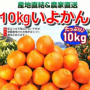 【約10kg】愛媛県産 伊予柑(いよかん)(ご家庭用・傷あり)