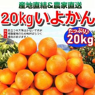 【約20kg】愛媛県産 伊予柑(いよかん)(ご家庭用・傷あり)
