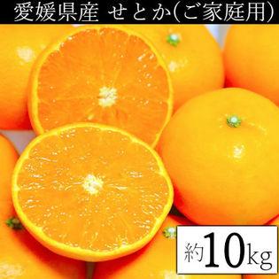 【約10kg】愛媛県産 せとか(ご家庭用・傷あり)